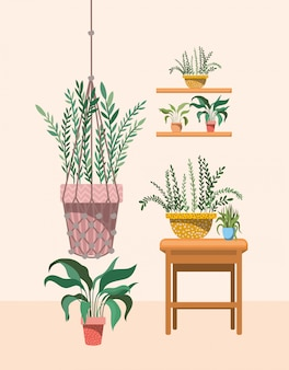 マクラメハンガーと棚の観葉植物