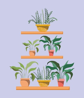 棚の観葉植物のセット