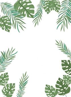 白い背景で夏の葉と枝