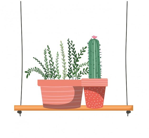 Комнатные растения с горшками на полке