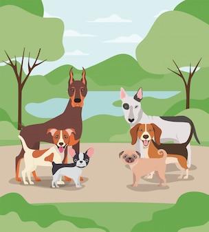 キャンプのキャラクターの犬ペットのグループ