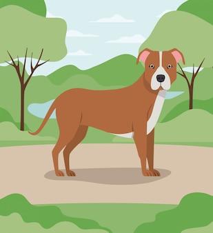 キャンプでのかわいいピットブル犬ペットキャラクター