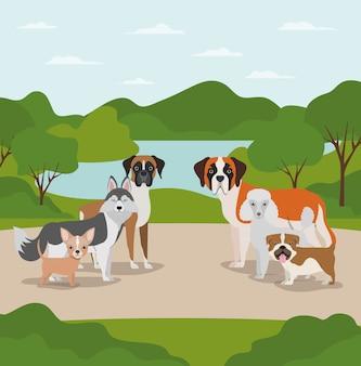 Группа собак домашних животных в лагере персонажей