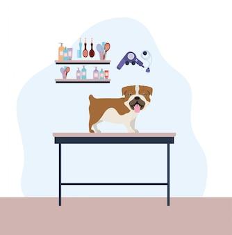 Милый бульдог собака домашнее животное характер