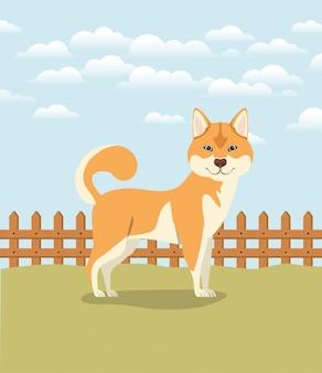 キャンプでかわいい秋田犬犬ペット
