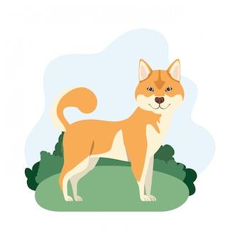 白地にかわいい秋田犬犬