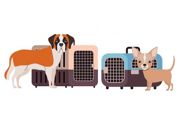 犬と白のペット輸送ボックス