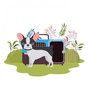 風景と犬とペットの輸送ボックス