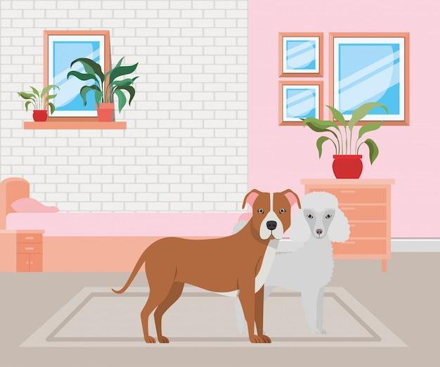 Милые собачки в спальне