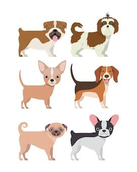 犬の品種グループ