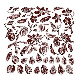 アーモンドセット。天然ヘーゼルナッツ。植物の分離の枝、果物、葉、花。白い背景の上の現実的なグループ。アート形状、手描きイラスト。有機天然乳、バイオオイル