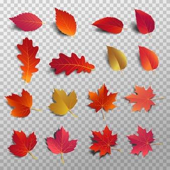 分離した影と赤い葉