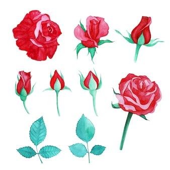 描かれた赤いバラの水彩画のセット