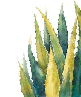 Алоэ вера оставляет акварельные иллюстрации на белом фоне