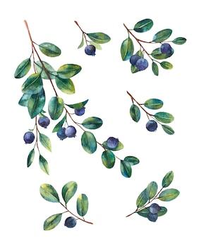 白い背景の上の果実と小枝のブルーベリー水彩イラスト