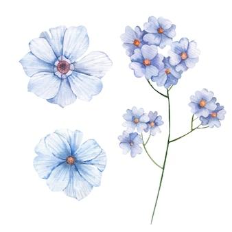白い背景のワイルドフラワーワスレナグサ水彩イラストのセット