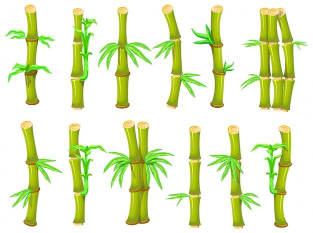 Бамбук мультфильм установить значок. иллюстрация дерево на белом фоне. мультфильм установить значок бамбука.