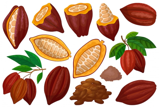 カカオ豆分離漫画セットアイコン。白い背景の上の図のチョコレートフルーツ。漫画セットアイコンカカオ豆。