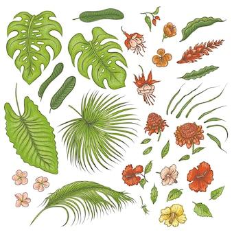 Эскиз цветной текстуры набор изолированных элементов. зеленые листья тропических растений, экзотические розовые и красные цветы бутоны. графический контур рисунка коллекции травы и растительности муссонов тропических лесов.