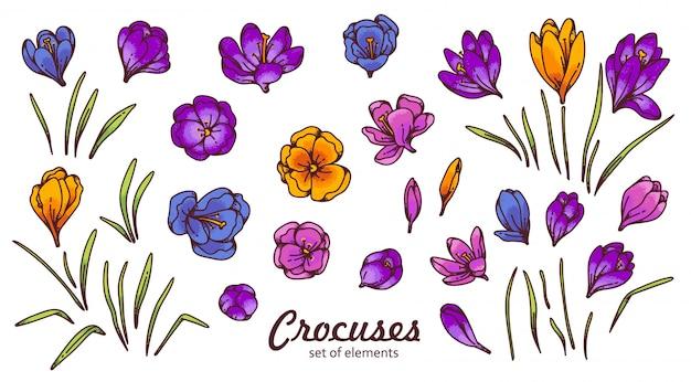 クロッカスの花のつぼみと葉春サクラソウアウトラインスケッチ図は白い背景で隔離。