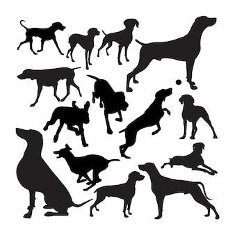 ワイマラナー犬動物のシルエット。