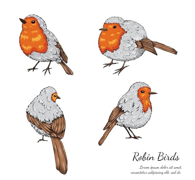 白い背景にロビンの鳥