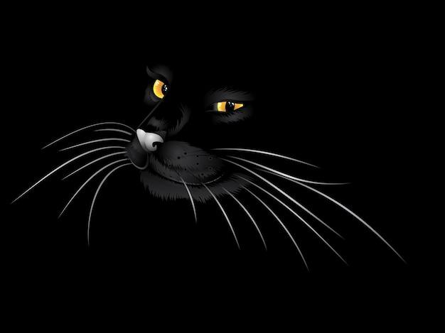 暗闇の中の黒い猫