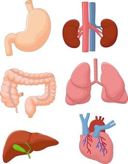 内部器官セット