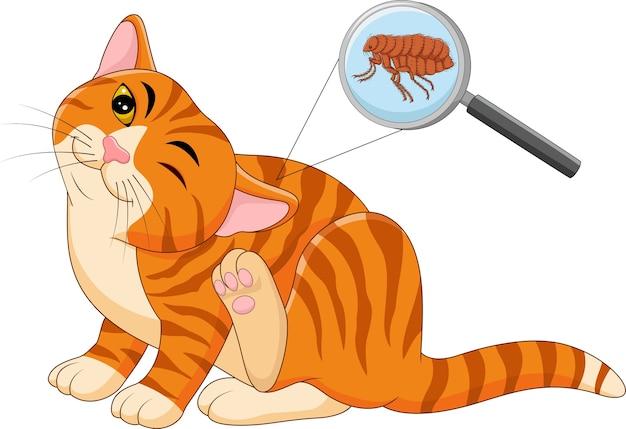 Векторная иллюстрация блоха зараженной кошки