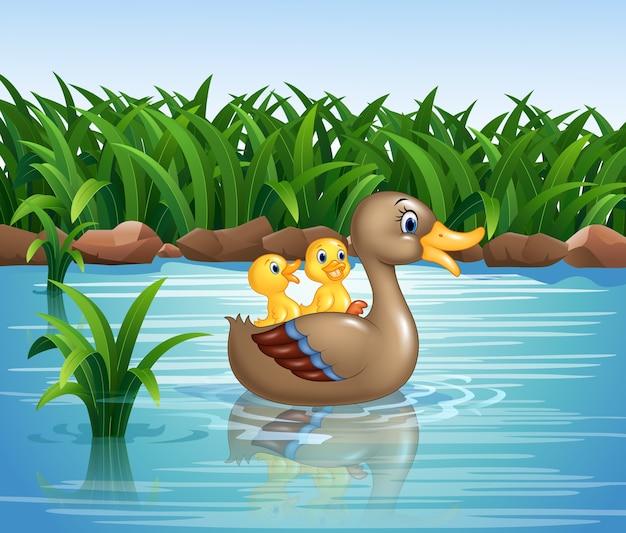アヒルの家族の水泳