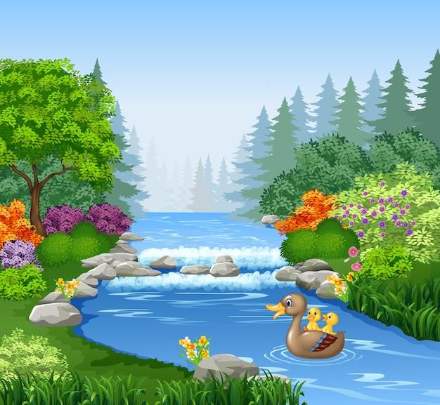 かわいいアヒルが池で泳いでいる