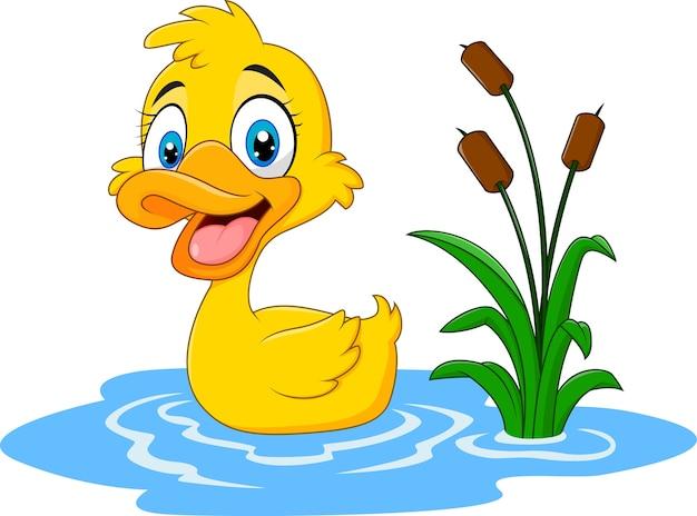 かわいい赤ちゃんのアヒルが水に浮かぶ