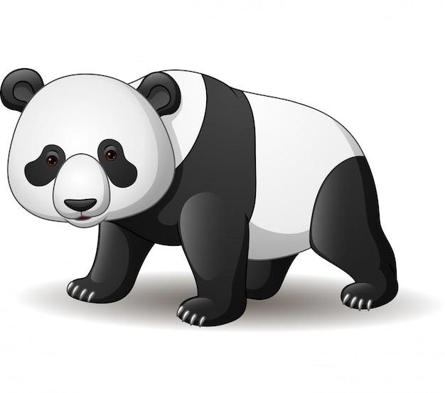 白い背景で隔離の漫画パンダ