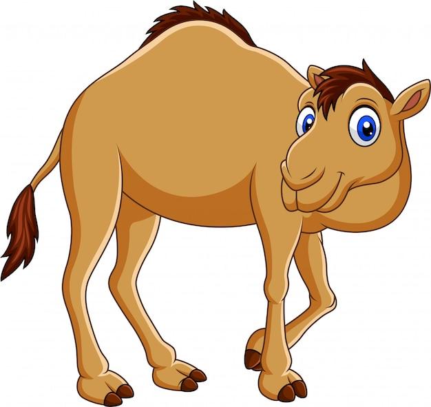 Мультяшный верблюд на белом фоне