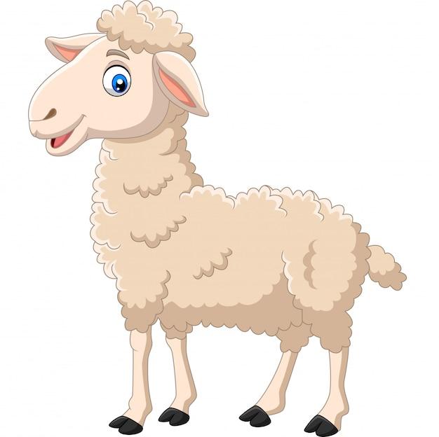 白い背景に分離された漫画幸せな子羊