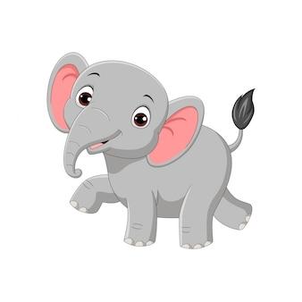 白で隔離されるかわいい赤ちゃん象
