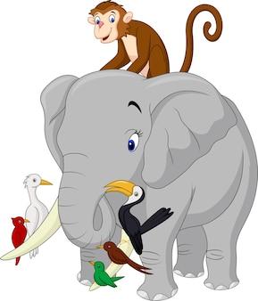 Счастливые животные мультфильм