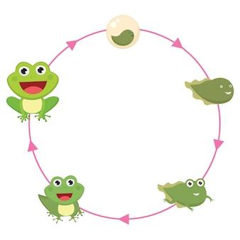 カエルのライフサイクル