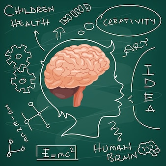 脳の解剖学と創造性の概念