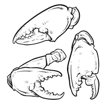 Краб когти, изолированных на белом фоне