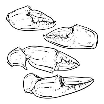 白い背景にある蟹の爪