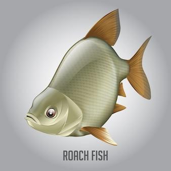 ローチ魚のベクトル図