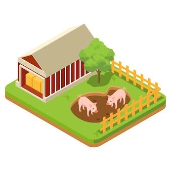 パドックで豚を含む家畜