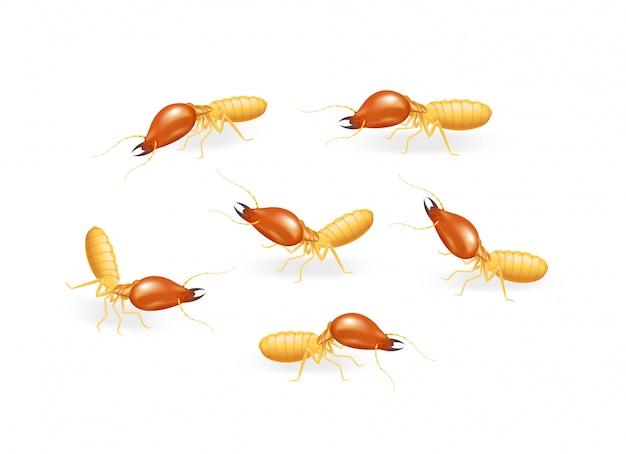 Иллюстрация термит, изолированные на белом фоне, вид насекомых термит муравей едят дерево