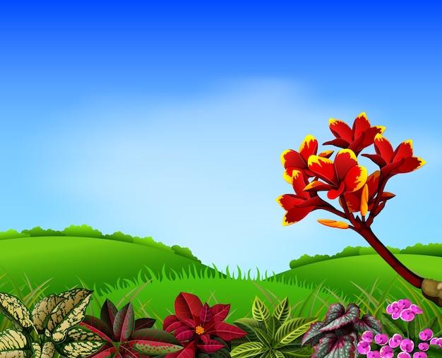 山とプルメリアの花のアクセント