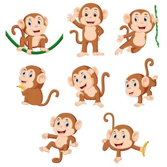 Коллекция обезьян, играющих на зеленой веревке