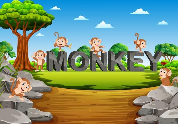 サルは庭の猿のアルファベットで遊んでいます。