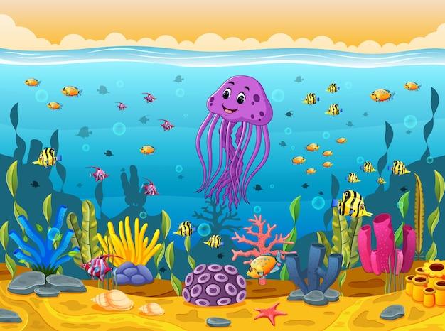 海の下でかわいいイカ