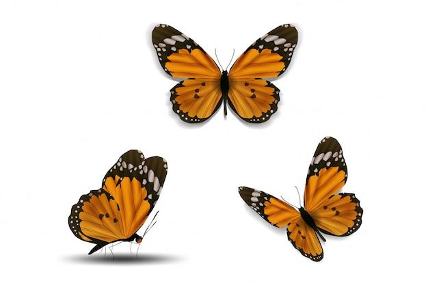 白い背景の上の様々な蝶