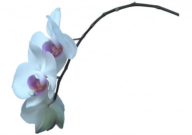 Белая орхидея с цветами